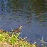 Lac en automne (2) - bergeronette