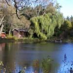 Lac en automne (7)